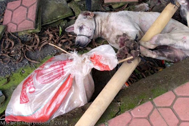 dog tied for dog meat