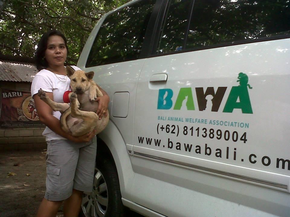 BAWa bus Tollwut impfung