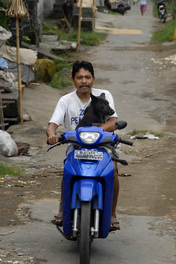 Dog arrives on motorbike to the free clinic